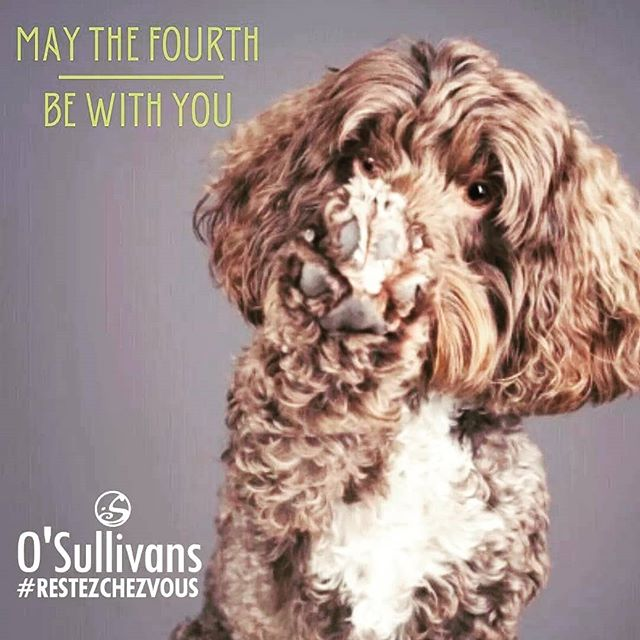 #mayfourth be with you ! @rileythecockapooo . . Bon #starwars day à tous ⭐ #restezchezvous 🐶