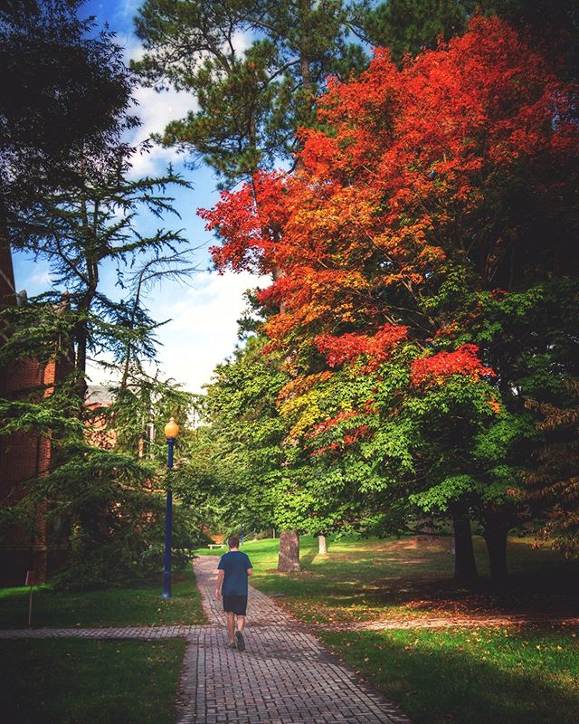 A sneak peek of peak fall colors.